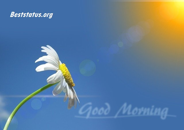 Good Morning love Message Best Status Greetings Wishes for GF & BF