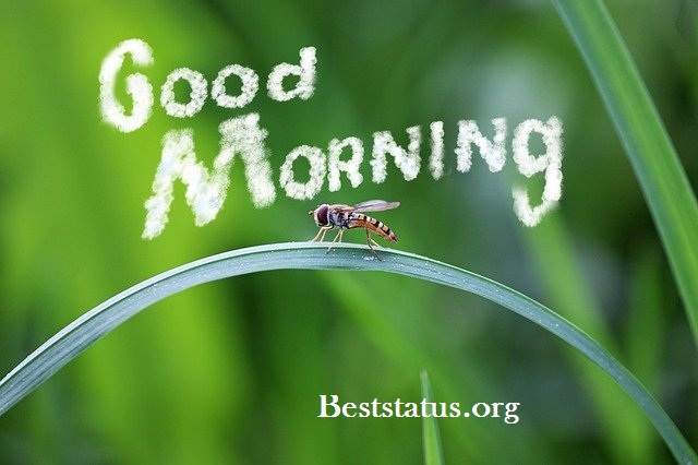 good morning message in hindi for girlfriend