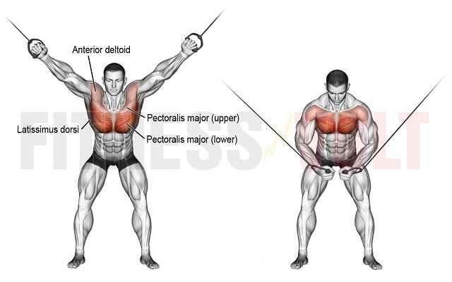 Best Bodybuilding Cable Squats Machine | Cable squat row