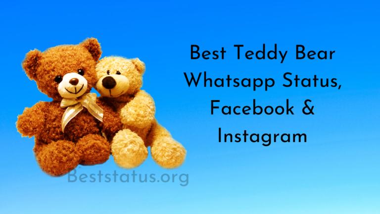 Teddy Bear Whatsapp Status, Facebook, and Instagram