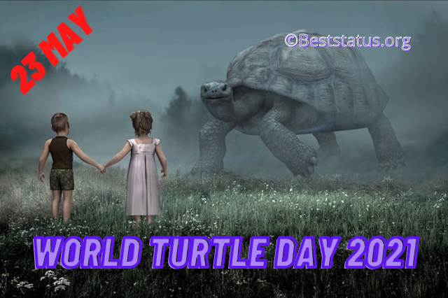 Best World Turtle Day 2021: Quotes, Wishes, Messages, And Images To Send Your Family And Friends
