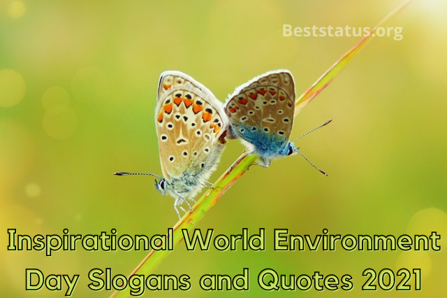 Inspirational World Environment Day Slogans and Quotes