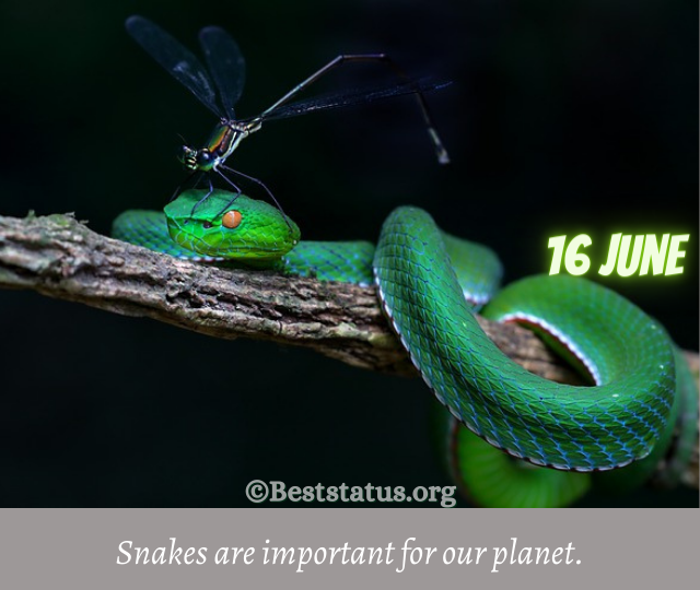 Snake Quotes for Instagram