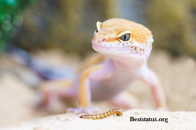 Happy World Lizard Day 2021: Quotes, Messages, And Greetings